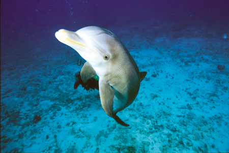 Delfin in Xcaret